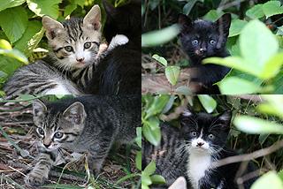 kitten012.jpg