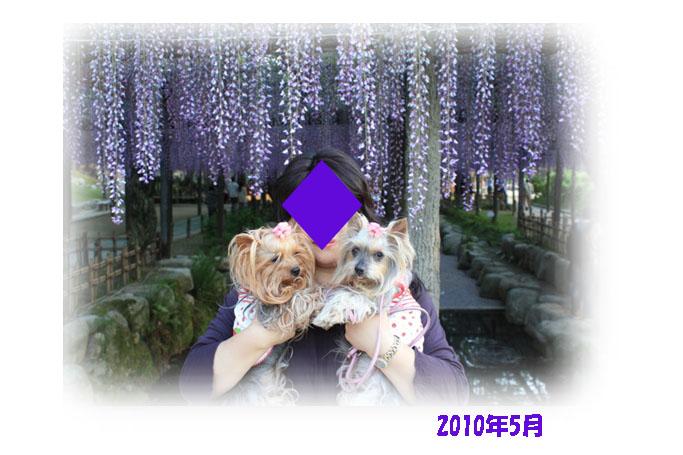 IMG_3425a.jpg