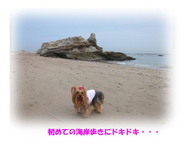 IMG_6811a.jpg