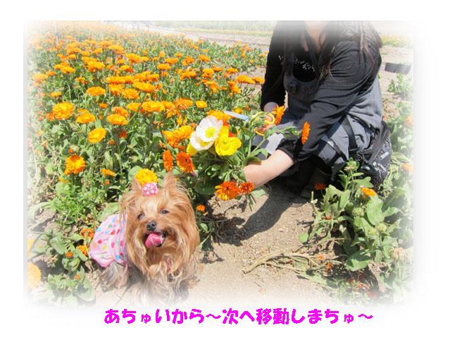 IMG_7094a.jpg
