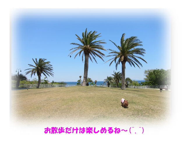 IMG_7102a.jpg