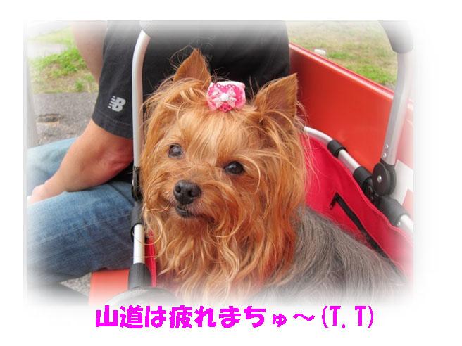 IMG_7330.jpg