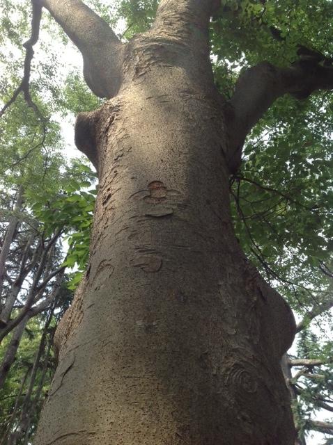 木のぼり2