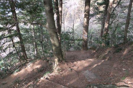 モミカヤ林