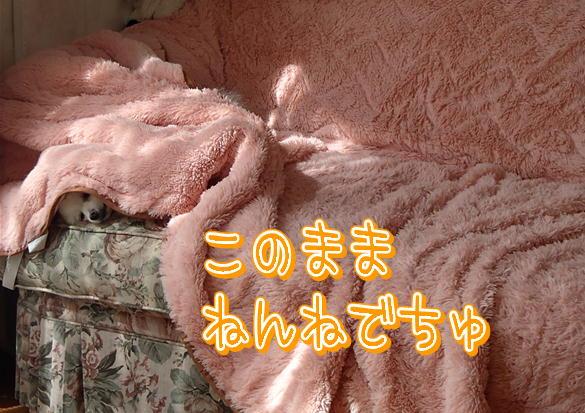 M12_20130821095708f5b.jpg