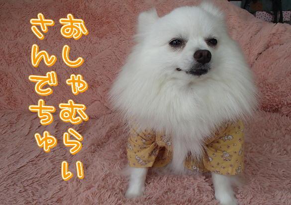 M3_20130802092616e0d.jpg