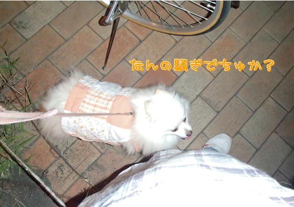 m2_20130902111957e41.jpg