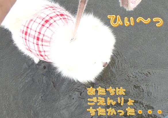 m6_20130812110011ada.jpg