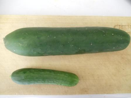 cucumber.jpeg
