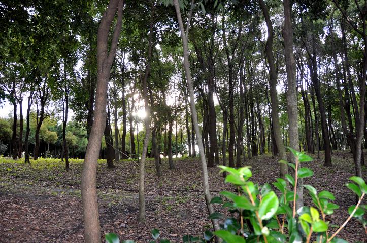 森の木陰で