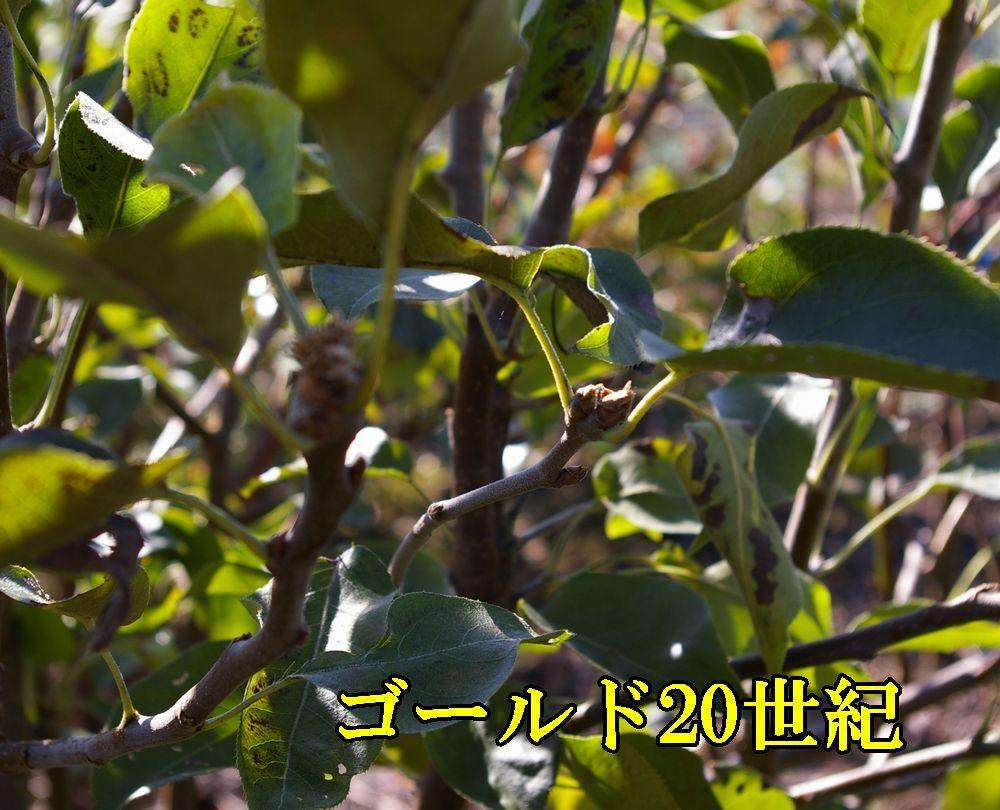 1G20sei1118c1.jpg