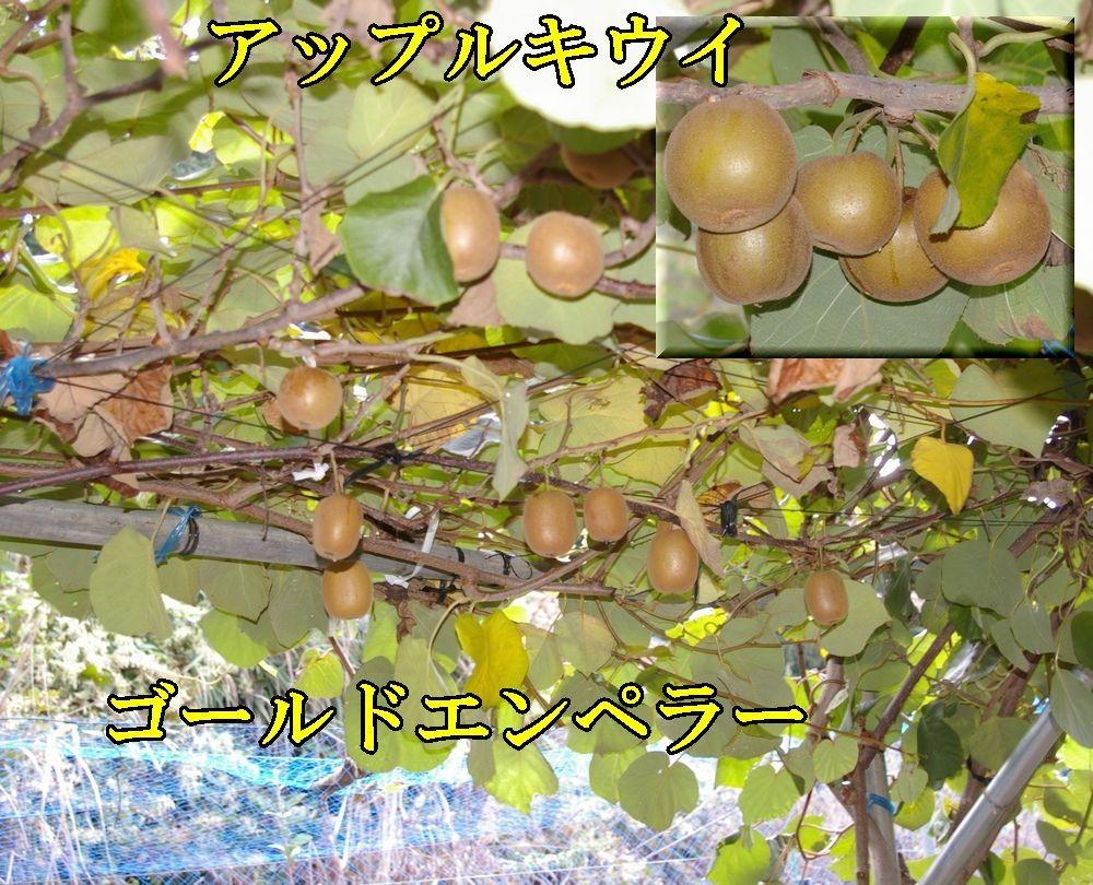 1GE_AP1110c1.jpg