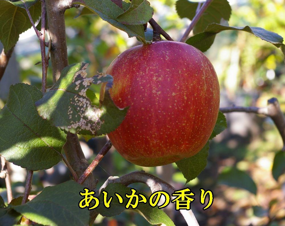 1aika1121c1.jpg
