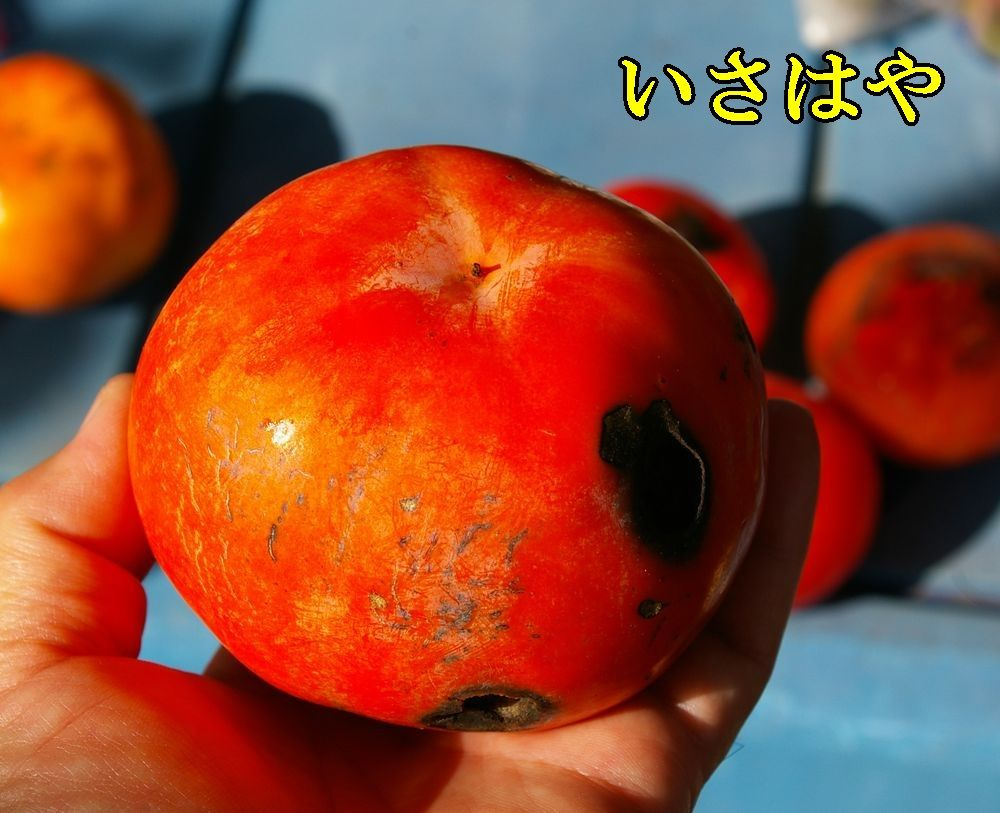 1isahaya1102c1.jpg