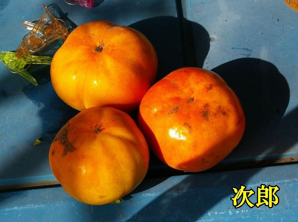 1jirou1102c1.jpg
