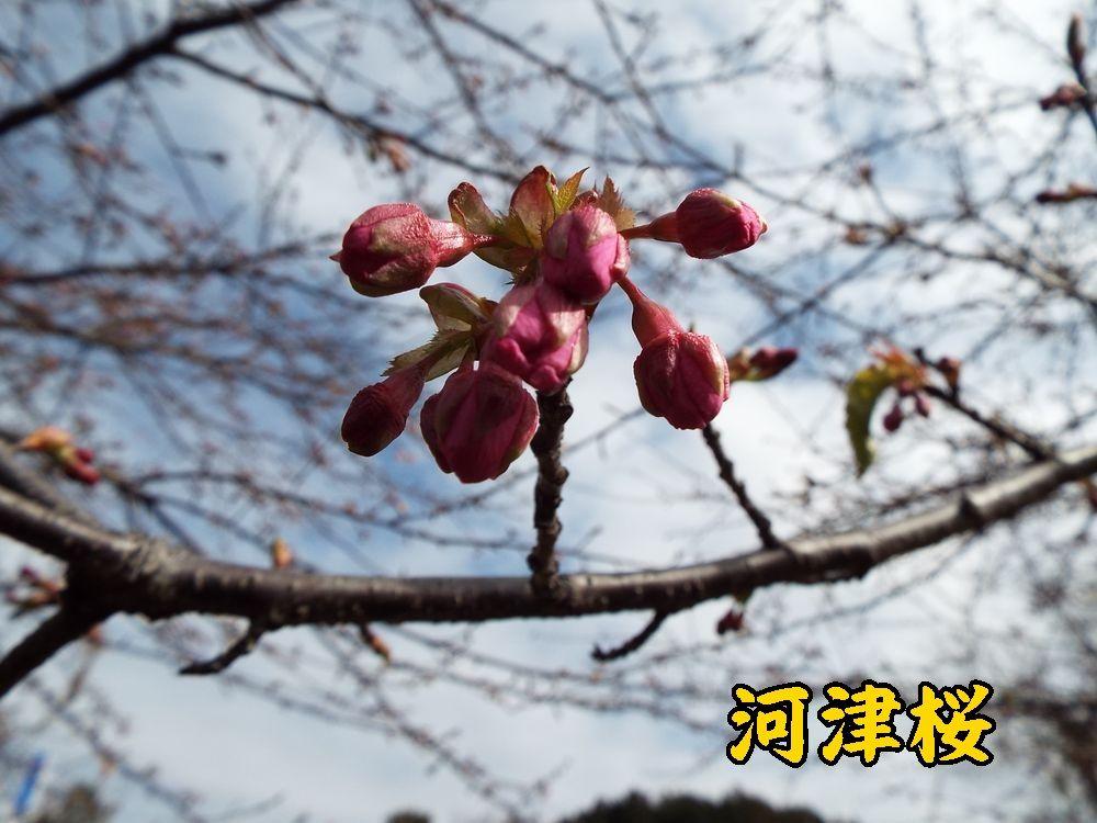 1kawazu0211c1.jpg