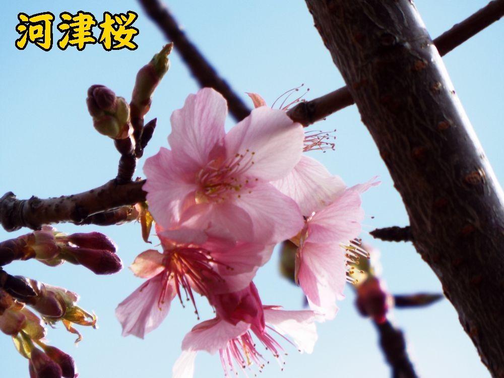 1kawazu0211c3.jpg