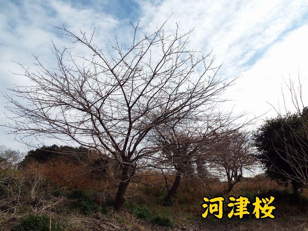 1kawazu0211c4.jpg