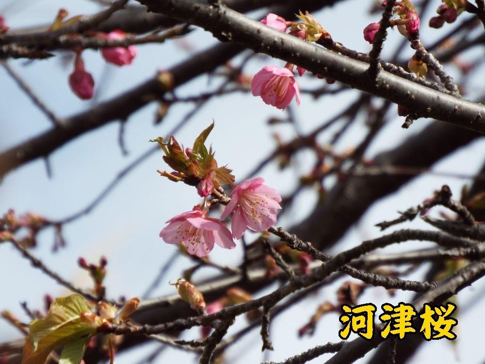 1kawazu0211c5.jpg