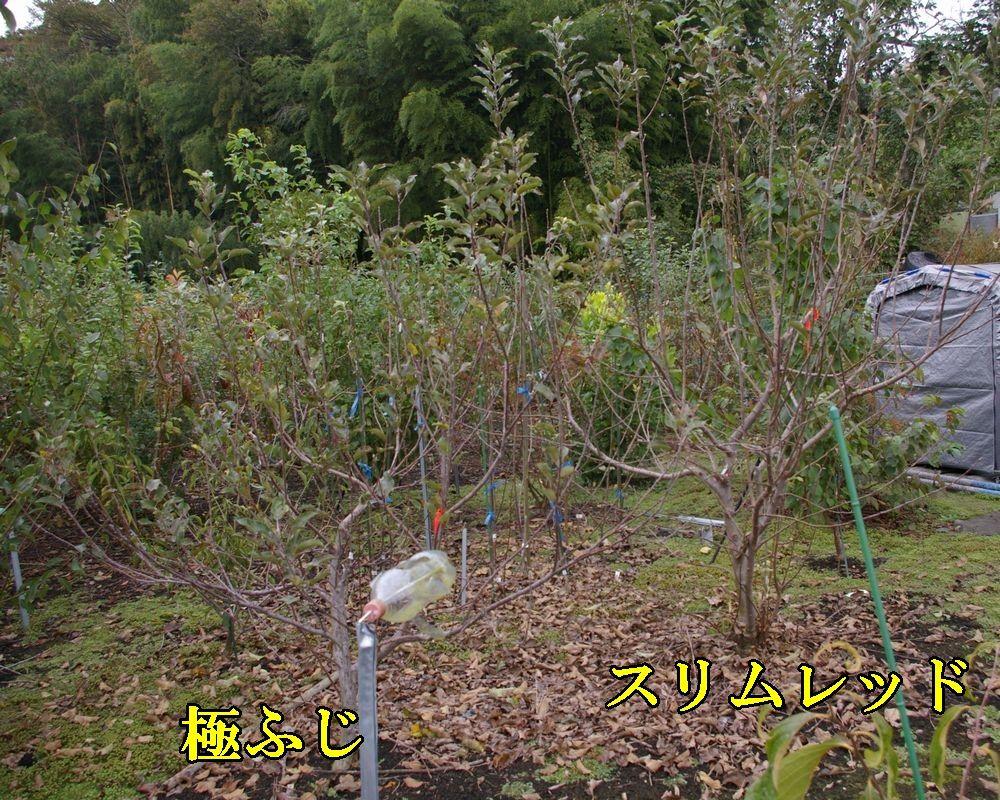 1kiwa_sli1111c1.jpg