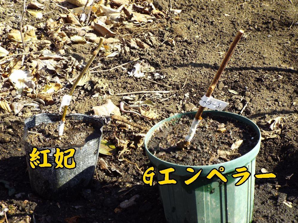 1kou_Gem0121c1.jpg