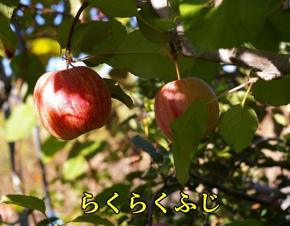 1rakufuji1121c1.jpg