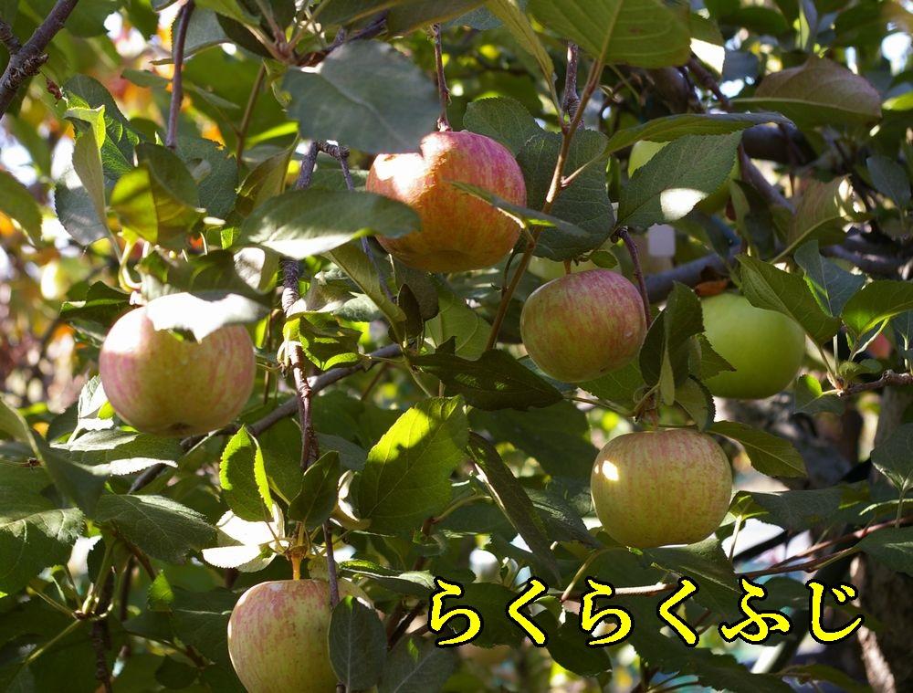1rakufuji1121c2.jpg