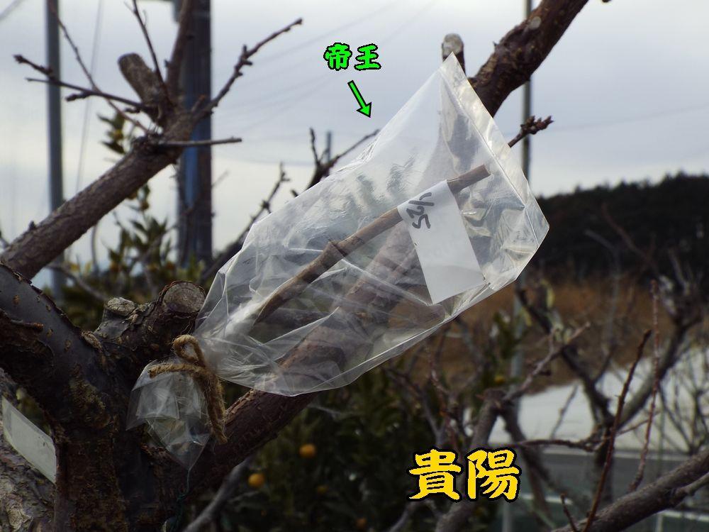 1sumomo0125c1.jpg