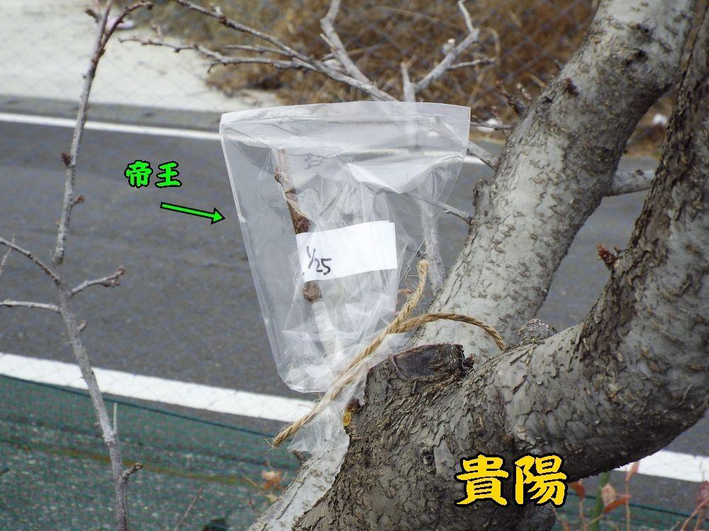 1sumomo0125c3.jpg