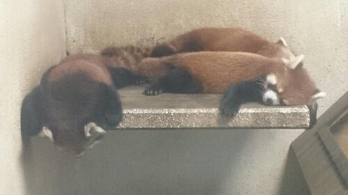 res panda