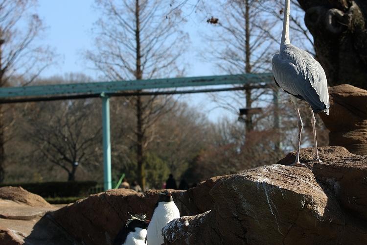 すずめも野鳥34