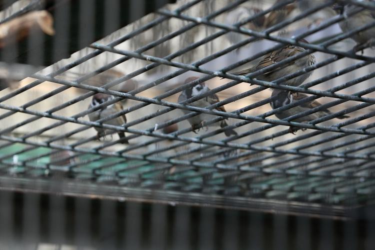 すずめも野鳥27