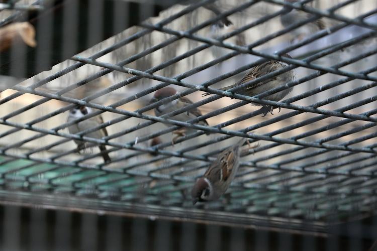 すずめも野鳥28