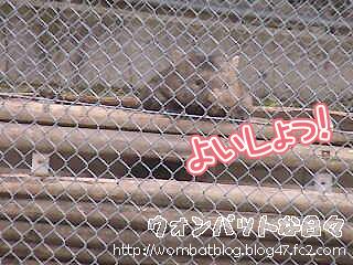 f0851(トンネルからこんにちは03)