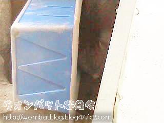 f0874(巣穴でお昼寝)