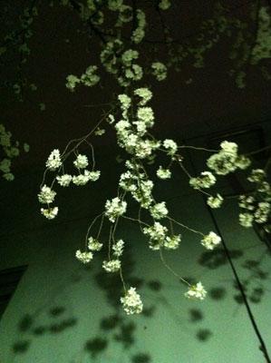 花見20130323