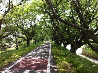 ロードバイク_高崎行き20130519_09