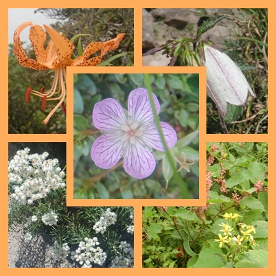 012 由布岳の花