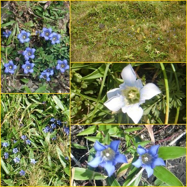 018 三股の花
