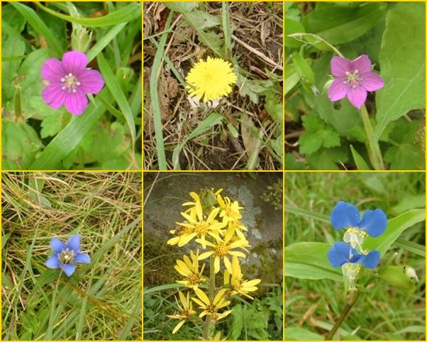 014 坊がつる花