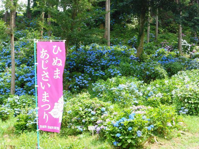 ひぬま20130715011