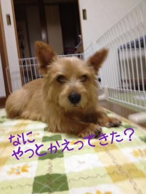 蜀咏悄+3+(1)_convert_20130602205702
