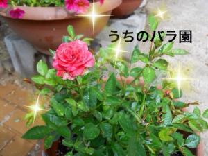 蜀咏悄+2+(1)_convert_20130607205447