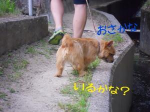 蜀咏悄+3+(1)_convert_20130608215851