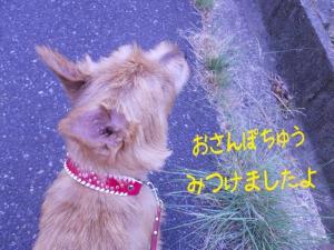 蜀咏悄+(5)_convert_20130613225849