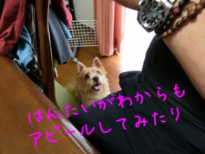 蜀咏悄+1_convert_20130619080200