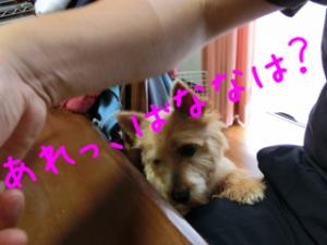蜀咏悄+1+(1)_convert_20130619075004