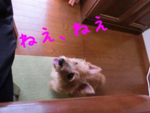 蜀咏悄+3+(1)_convert_20130619080305