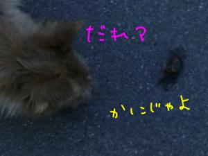 蜀咏悄_convert_20130716093617