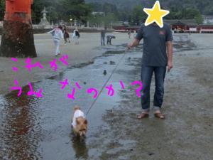 蜀咏悄+(3)_convert_20130716092702